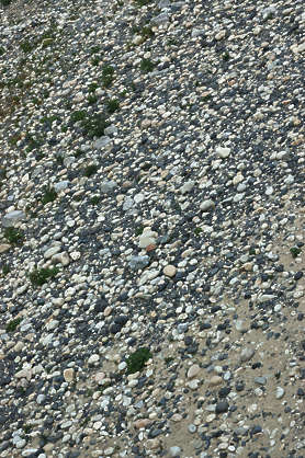pebbles stones gravel floor ground cobble