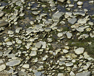 river riverbed stones pebbles