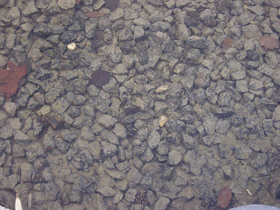 pebbles stones gravel underwater