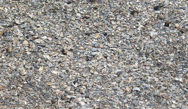 pebbles stones gravel shells beach