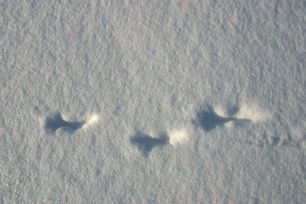 snow tracks footsteps
