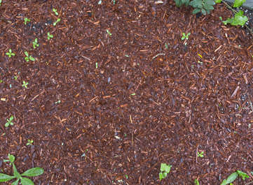 ground woodchips chips soil