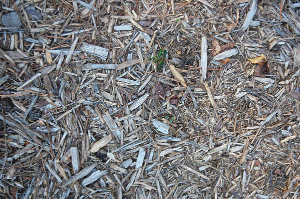 wood chips floor ground