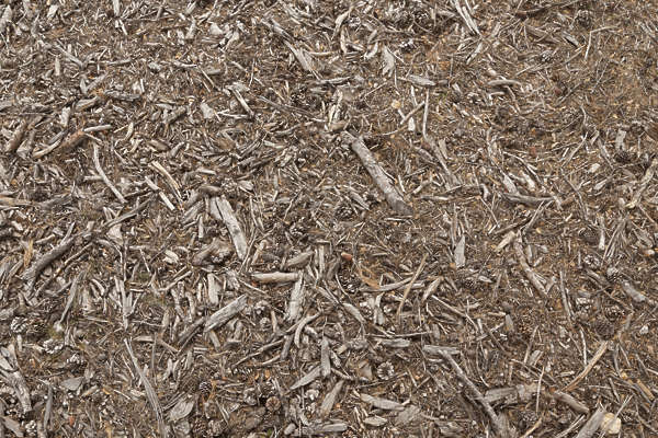 ground forest floor woodchips