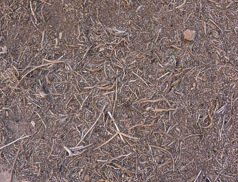 ground morocco twigs forest floor