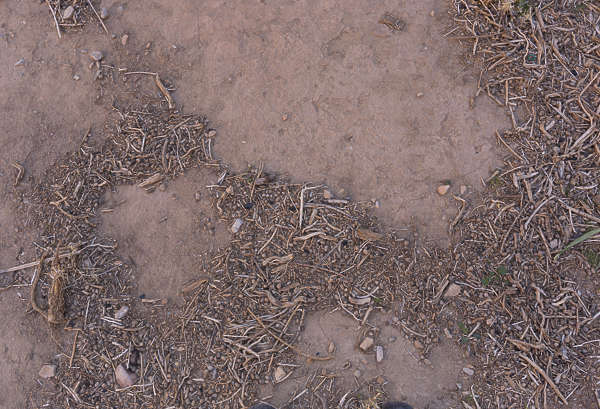 ground morocco twigs forest floor sand