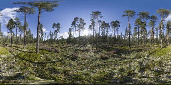 Panorama HDR HDRi lightprobe panoramic high dynamic range spherical 360 outdoor forest trees green Norway clear blue sunset