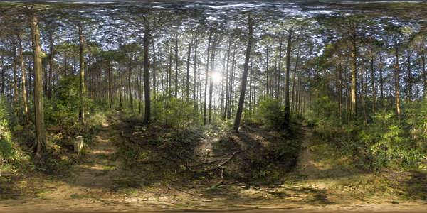 Panorama HDR HDRi lightprobe panoramic high dynamic range spherical 360 outdoor forest trees Japan sun sunny asian