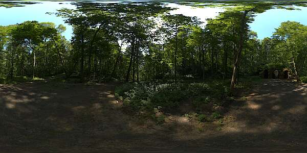 Panorama HDR HDRi lightprobe panoramic high dynamic range spherical 360 outdoor forest trees cave light bright overcast