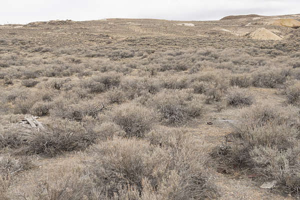 USA Bodie ghosttown ghost town old western goldrush desert arid landscape bushes dried bush dry