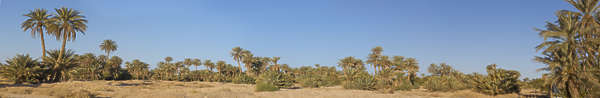 landscape landscapes background morocco palm trees palmtree palmtrees desert oasis