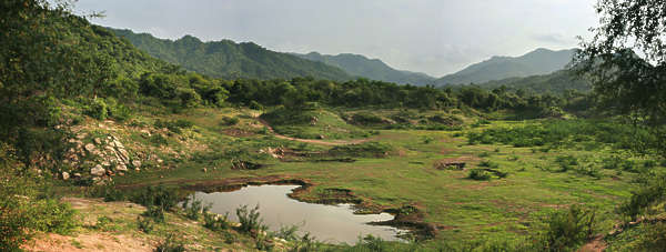 landscape Ranakpur india trees forest grass meadow