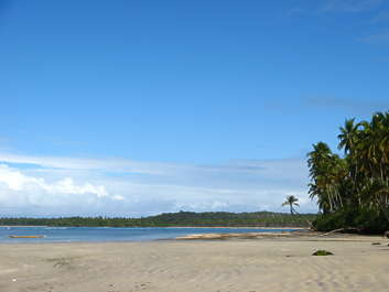 landscape sky tropical tropic beach palm