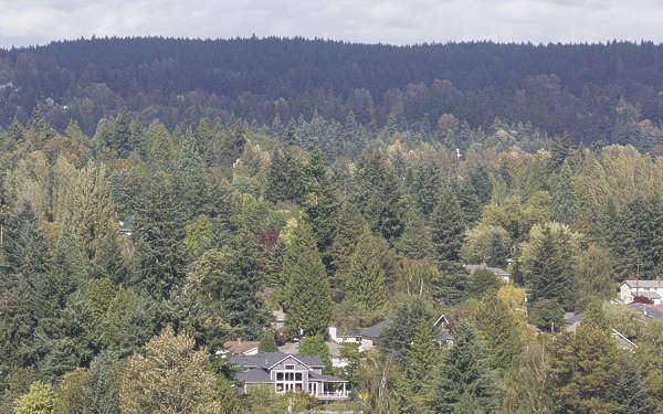 landscape horizon trees suburb forest seattle usa