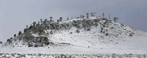 landscape landscapes background morocco snow winter tree trees hill