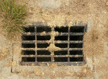 manhole sewer grate grating metal grass dead