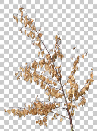 plant masked alpha foliage branch dry isolated