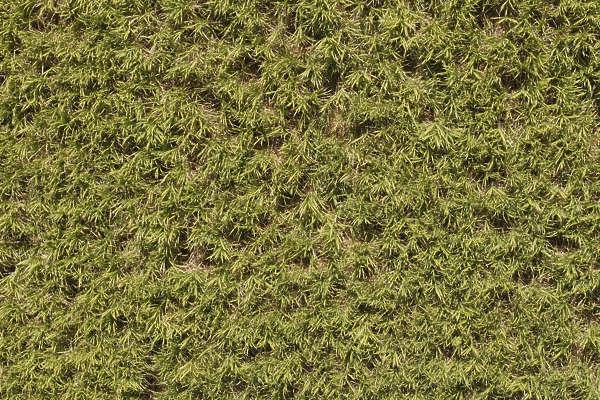 tall grass texture seamless. Field Sugar Cane Crop Grass Tall Plant Plants Aerial Farmland Texture Seamless
