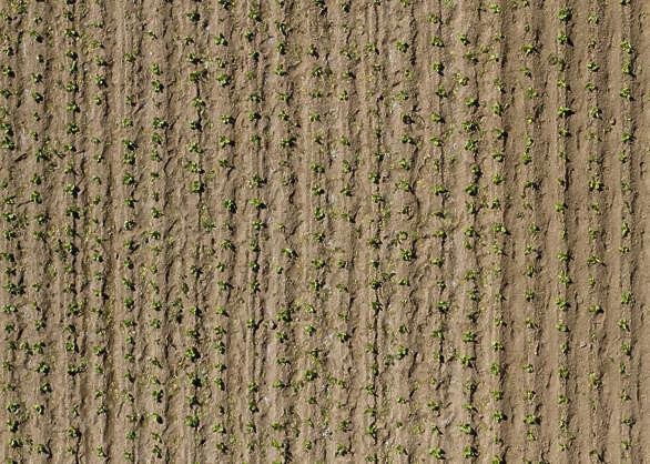 farmland0013 free background texture aerial farmland