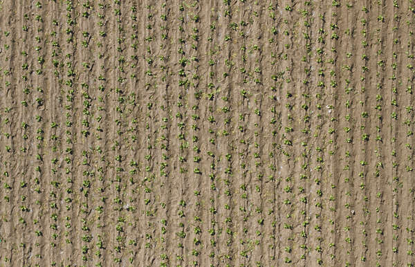 aerial farmland farm land plants crop ploughed plough groove trough plough plow