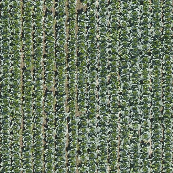farmland0025 - free background texture