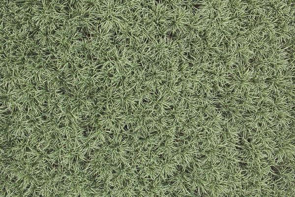 Farmland0050 Free Background Texture Aerial Ground