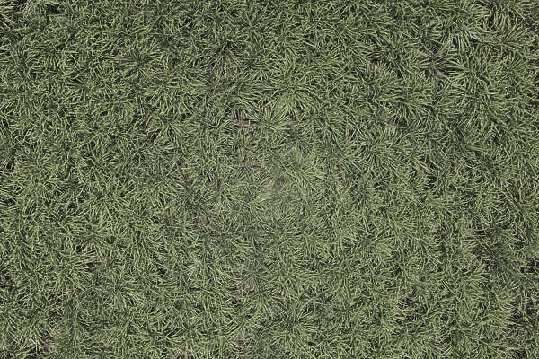 aerial ground terrain farmland crop farm land grass reed reeds tall
