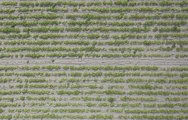 aerial ground terrain farmland crop farm land plants