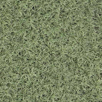 tall grass texture seamless. Aerial Ground Terrain Farmland Crop Farm Land Grass Reed Reeds Tall Texture Seamless