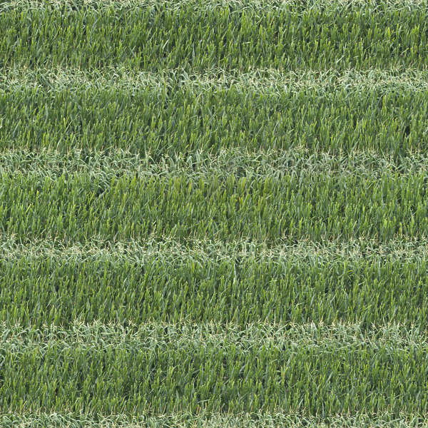 Farmland0060 Free Background Texture Ground Terrain