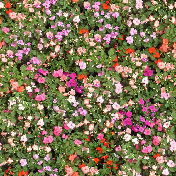 flowerbeds0009 - free background texture