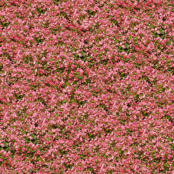 flowerbeds0001 - free background texture