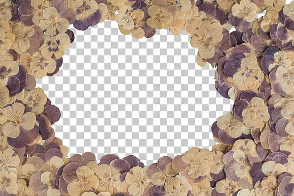 dried flowers pressed flower scrapbooking scrapbook pansies pansy border frame overlay