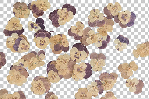 dried flowers pressed flower scrapbooking scrapbook pansies pansy background