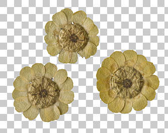 dried flowers pressed flower scrapbooking scrapbook backside