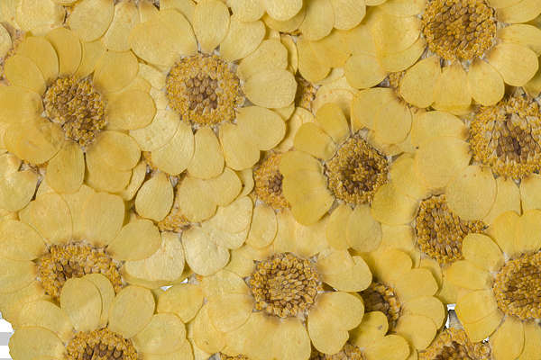 dried flowers pressed flower scrapbooking scrapbook background backgrounds