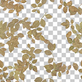 flower background flowers dried filled back scrapbooking cover petals petal leaves dry