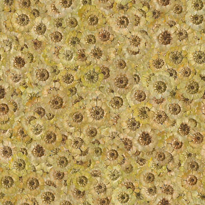 flower background flowers dried filled back scrapbooking cover petals petal