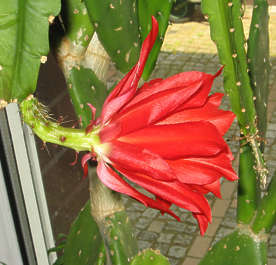 flower cactus tropical