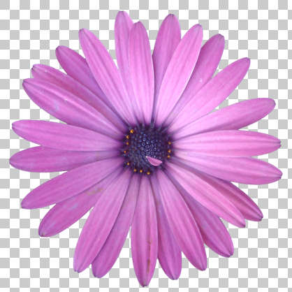 flowers0086 free background texture flower masked