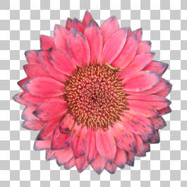 flower flowers masked isolated