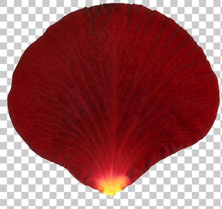 flowers0195 free background texture rose petal flower
