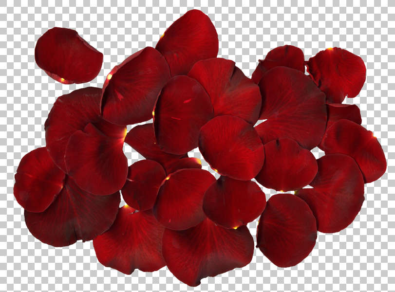 flowers0197 free background texture rose petal flower