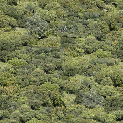 forest trees decidious
