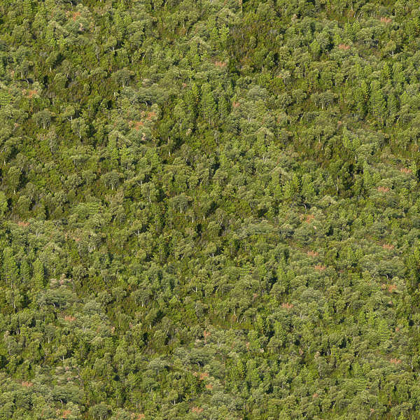 Natureforests0038 Free Background Texture Forest Trees