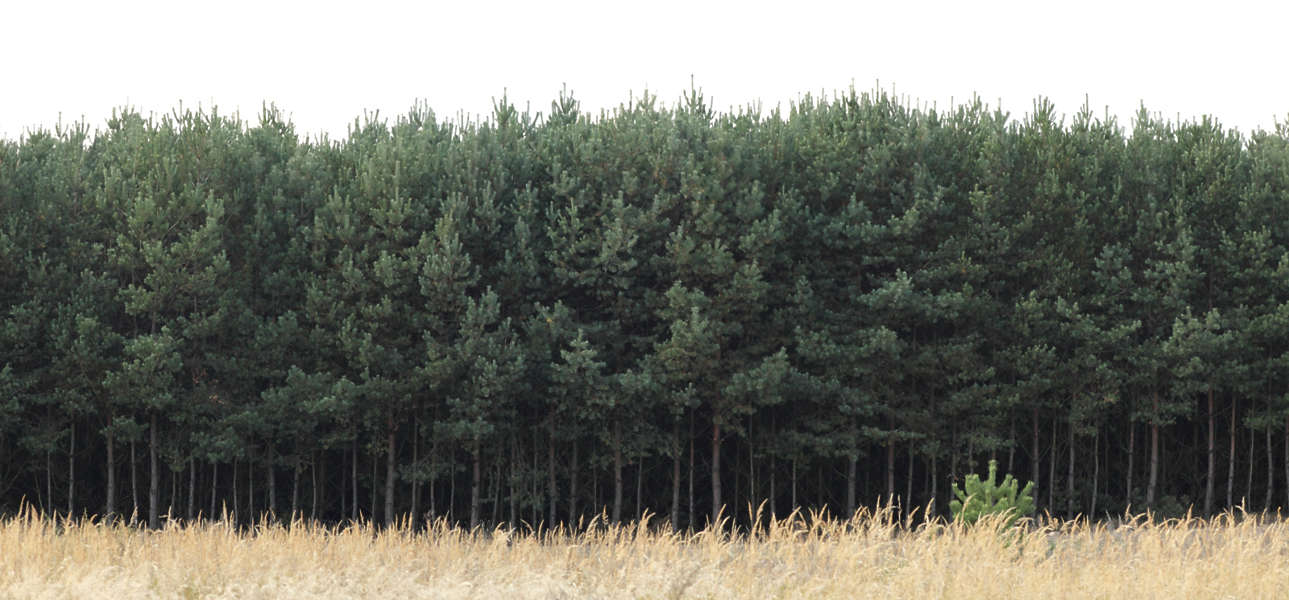 Natureforests0051