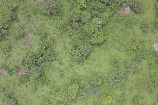 aerial ground terrain forest tree trees groundplants ground plants