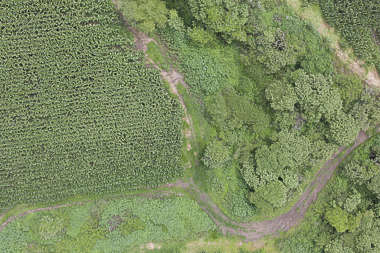 aerial ground terrain forest tree trees groundplants ground plants road farmland