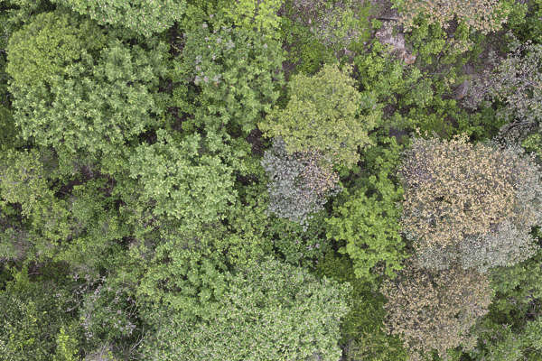 Natureforests0055 Free Background Texture Aerial