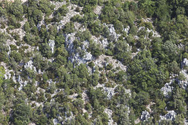 forest trees mountain cliff cliffs